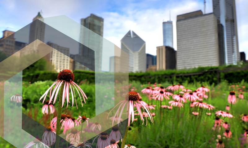 We Miss You, Millennium Park: 5 Places We Can't Wait to Visit Again